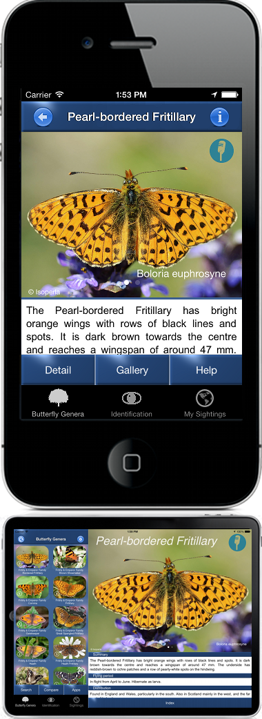 Butterfly Id: Butterfly Identification App For iPhone, iPad and Android